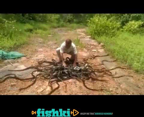 Wypuścił ponad 200 jadowitych węży