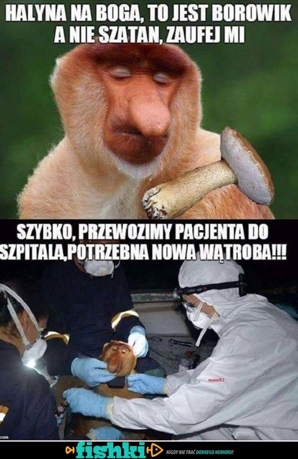 Zaufaj Januszowi