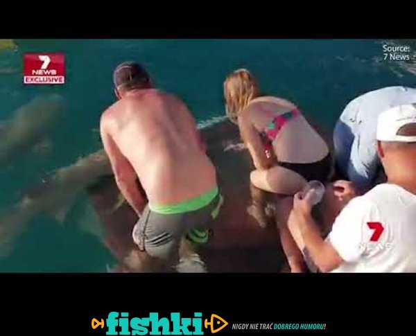 Tak się kończy dokarmianie rekina