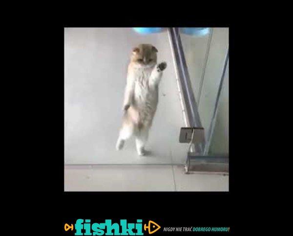 Tańczący kotek
