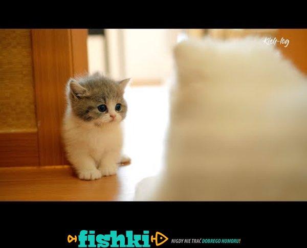 Pierwsze dni małego kotka