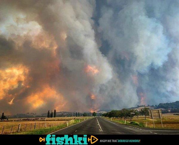 Zdjęcia przedstawiające Australię w ogniu - zdjęcie 24