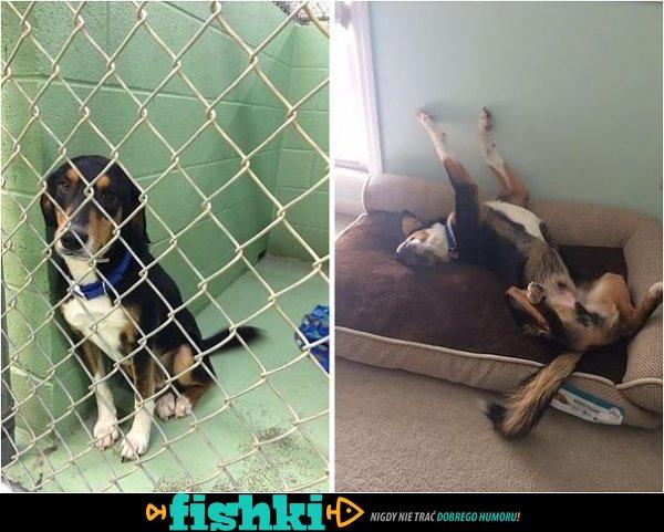 Tak adopcja wpływa na zwierzęta