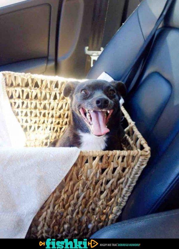 Tak adopcja wpływa na zwierzęta - zdjęcie 7