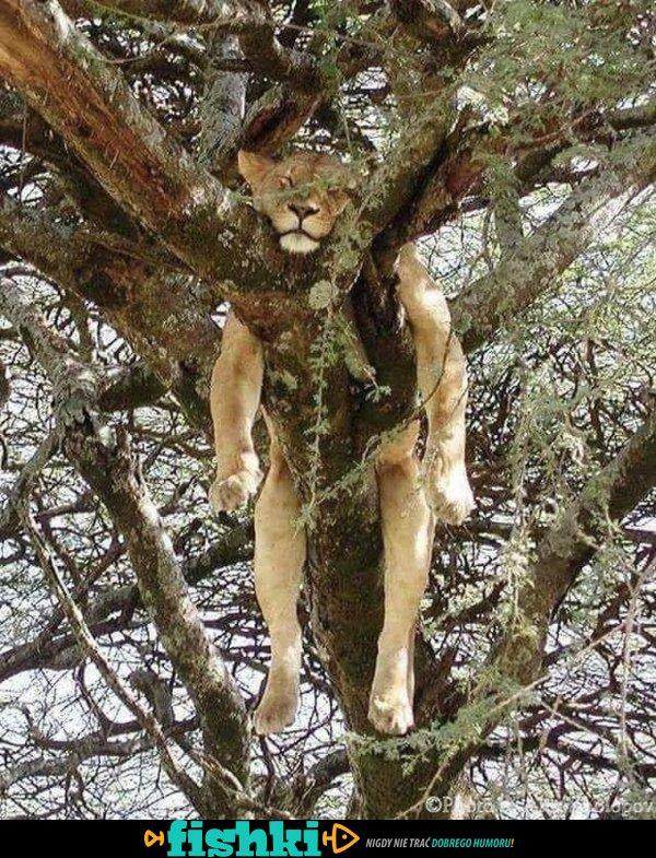 Urocze kociaki - zdjęcie 28