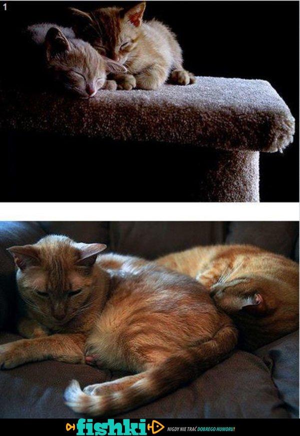 Dorastające kotki - zdjęcie 1