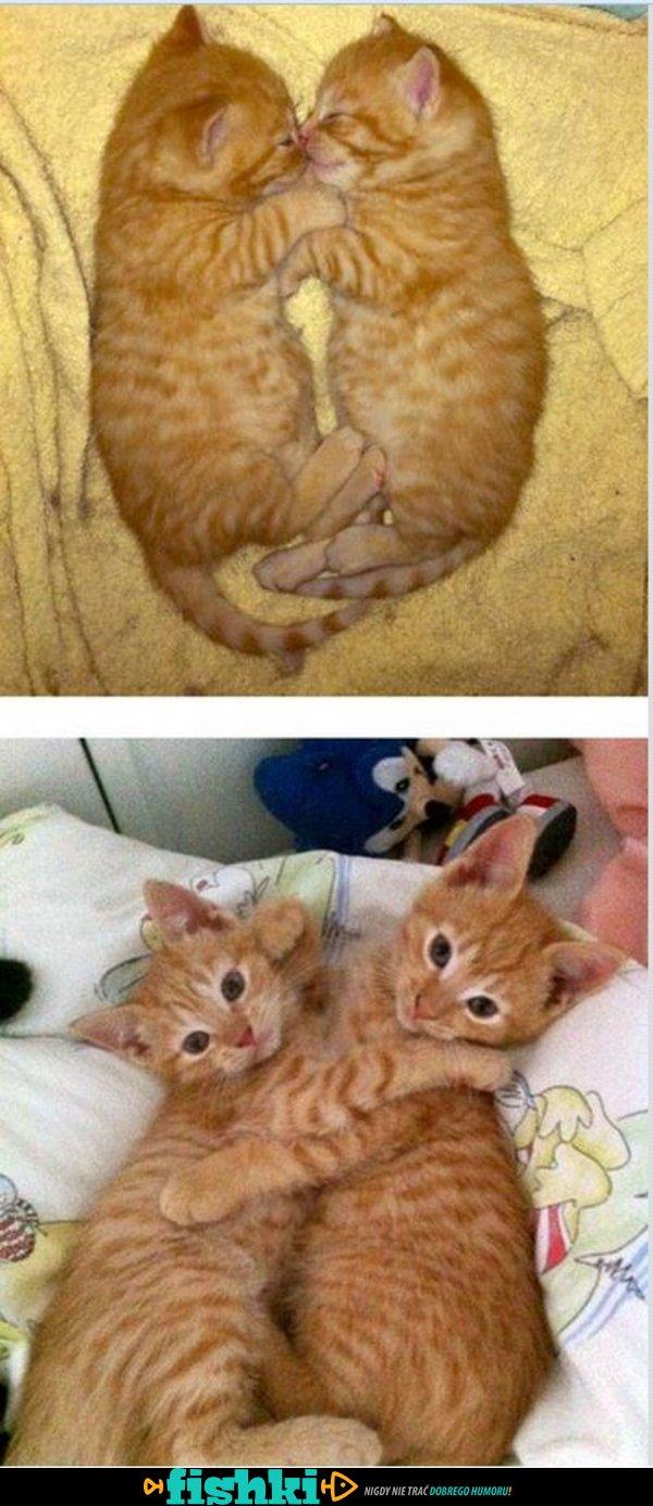 Dorastające kotki - zdjęcie 8