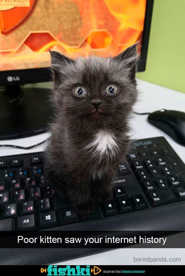 Posiadasz kota? Zrozumiesz to doskonale