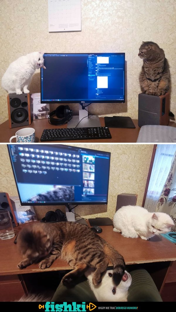 Praca zdalna ze zwierzakiem nie jest prosta - zdjęcie 34