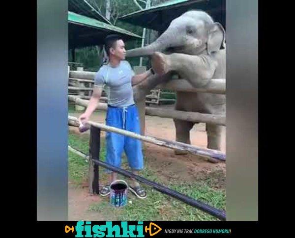 Zabawny słonik