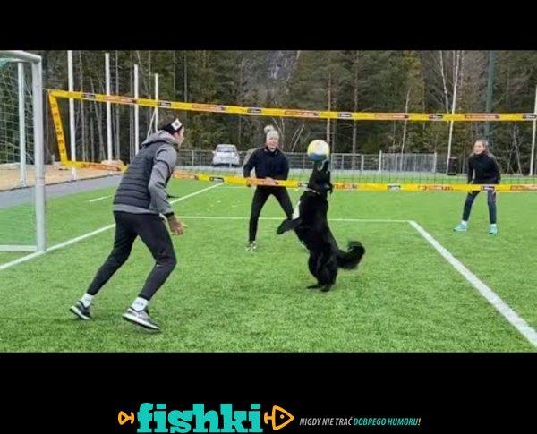 Piesek grający w siatkówkę