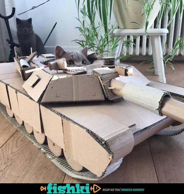 Kociaki w czołgach - zdjęcie 1