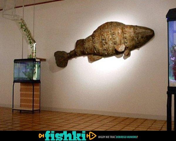 Nietypowe akwarium - zdjęcie 8