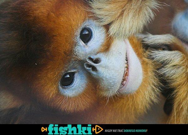 Dziwne zwierzęta - zdjęcie 10