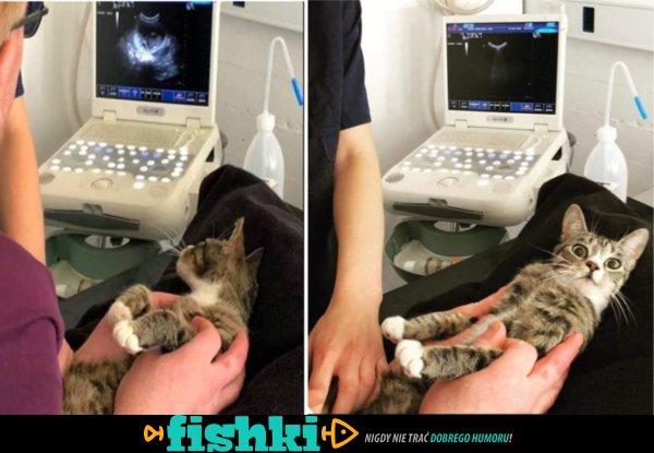 Kotek dowiedział się o ciąży