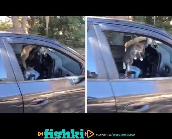 Zostawił otwarte okno w samochodzie