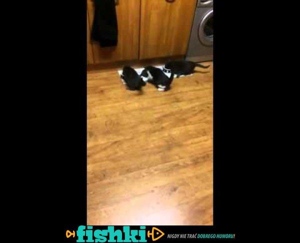 Pora karmienia kotów