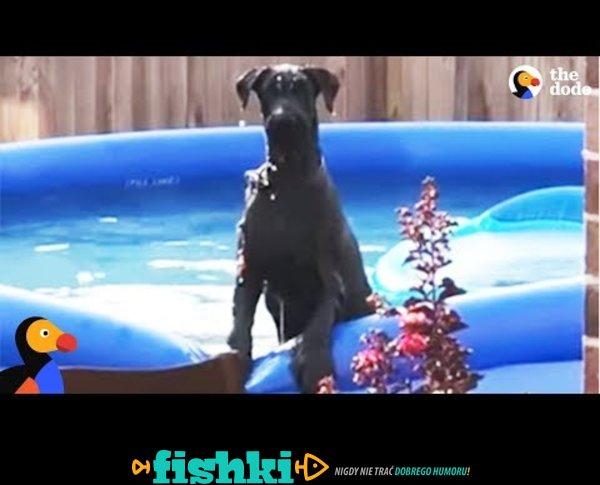 Pies przyłapany na zabawie w basenie
