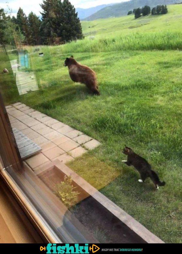 Zwierzęta, które miały zły dzień - zdjęcie 14