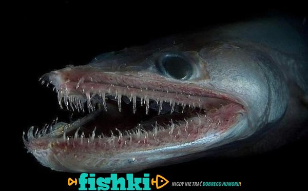Morskie potwory - zdjęcie 1