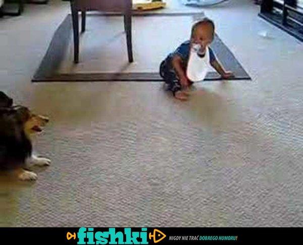 Zostawiła synka samego w pokoju z psem