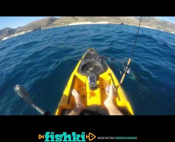 Atak rekina na kajakarza