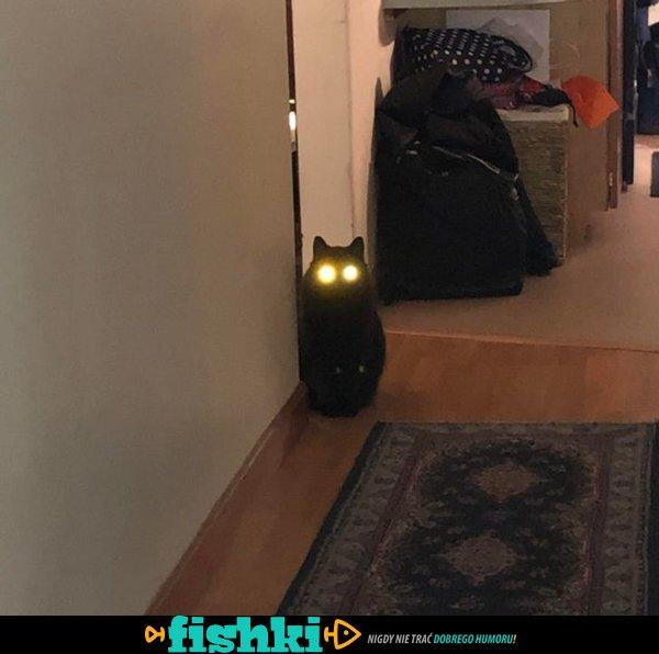 Opętane kociaki