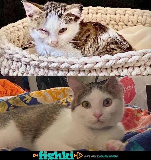 Przed i po adopcji - zdjęcie 1