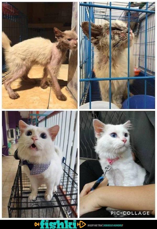 Przed i po adopcji - zdjęcie 29