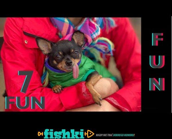 Śmieszne koty i psy zabawne zwierzęta Padniesz ze śmiechu 7Fun #4
