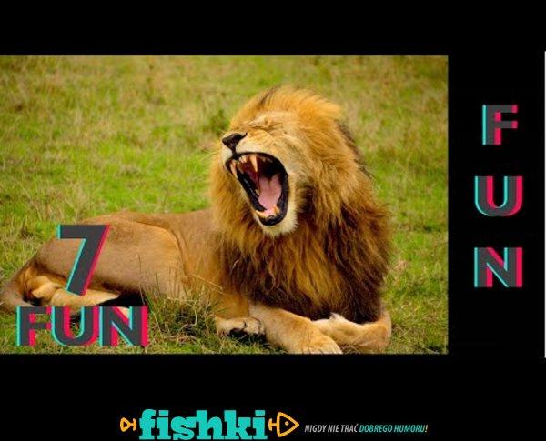 Śmieszne koty i psy zabawne zwierzęta Padniesz ze śmiechu 7Fun #6