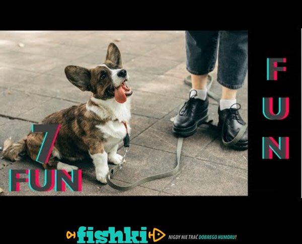 Śmieszne koty i psy zabawne zwierzęta Padniesz ze śmiechu 7Fun #9