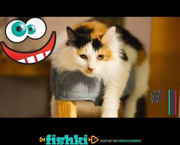 Śmieszne koty i psy zabawne zwierzęta Padniesz ze śmiechu funny #1
