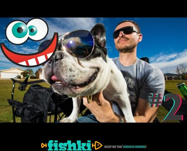Śmieszne koty i psy zabawne zwierzęta Padniesz ze śmiechu funny #2