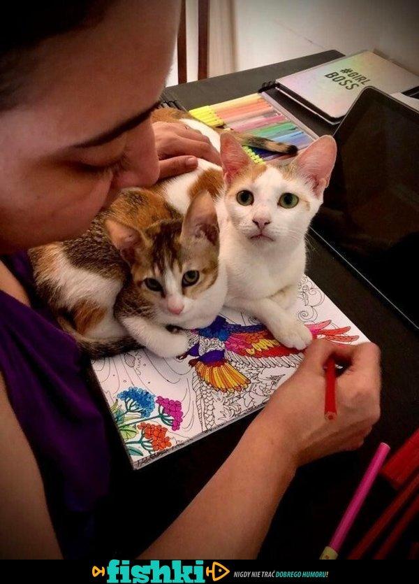 Urocze kotki - zdjęcie 1