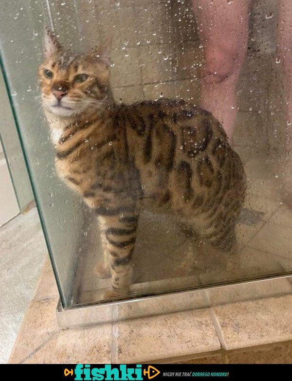 Urocze kotki - zdjęcie 13