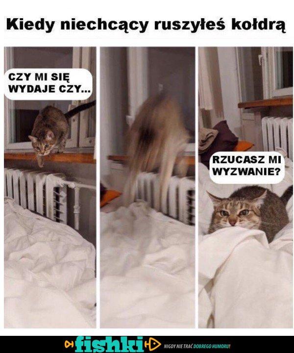 Właściciele kotów zrozumieją