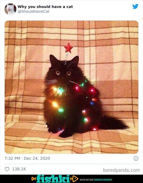 Urocze kotki - zdjęcie 48