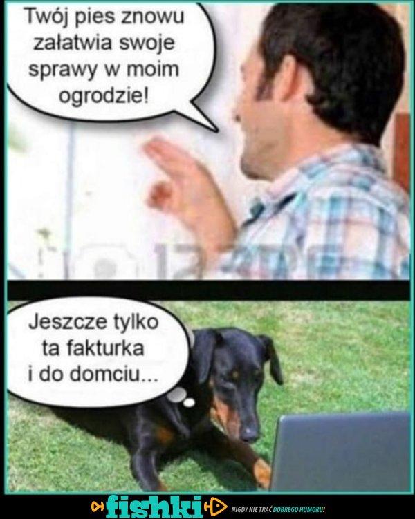 Twój pies...