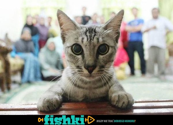 Kociaki zrujnowały zdjęcie - zdjęcie 29