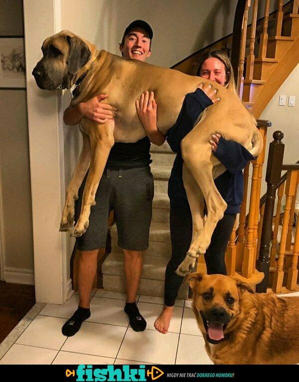 Ogromne psy