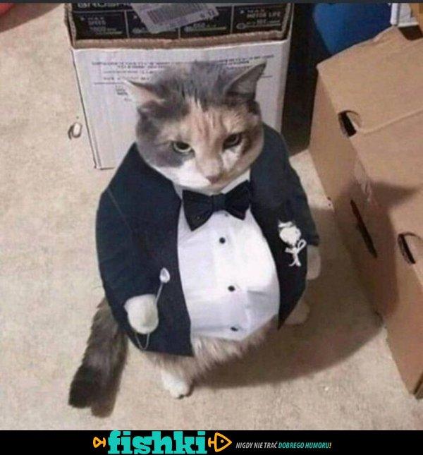 Urocze kociaki - zdjęcie 20