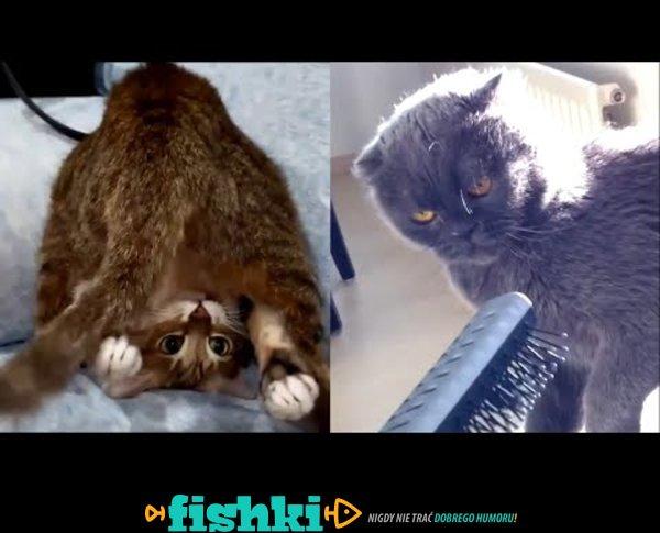 Śmieszne kociaki